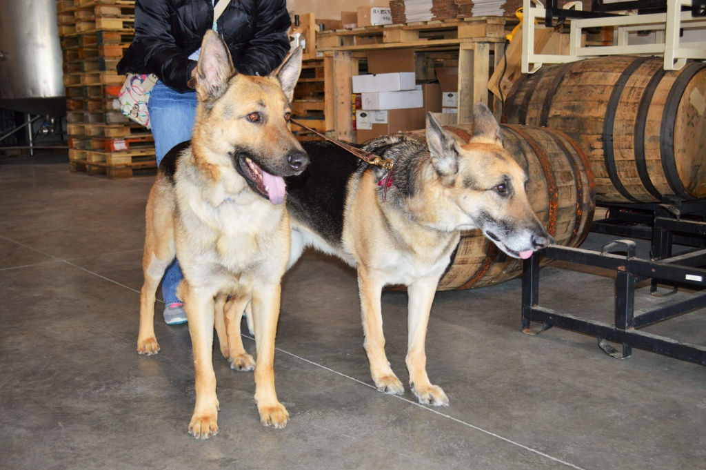 dog-friendly business in omaha lucky bucket brewery