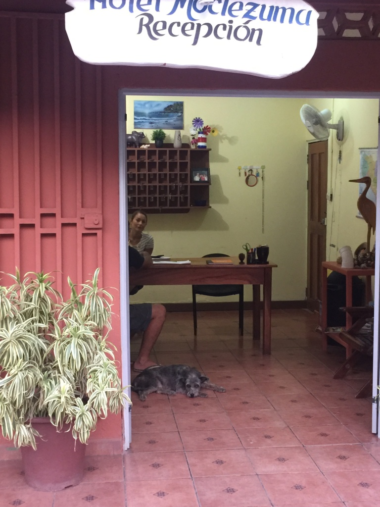 dog friendly costa rica