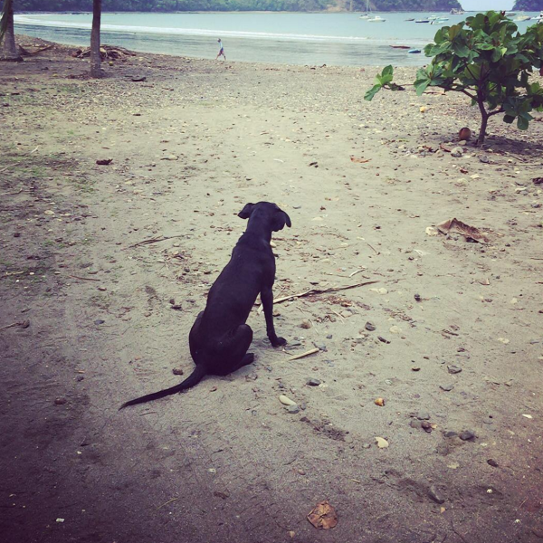 dog friendly costa rica manuel jaco beach