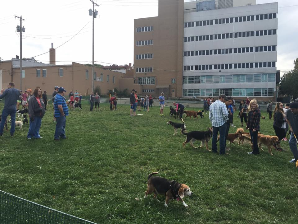omaha pop-up dog park